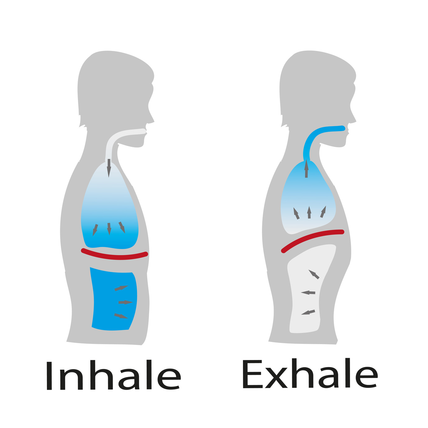 normal abdominal breathing